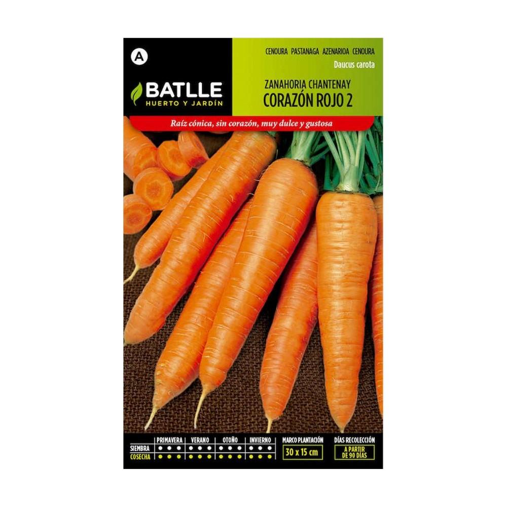 Semilla De Zanahoria Chantenay Hasta la edad media las zanahorias más consumidas eran de color morado, pues las anaranjadas llegaron después desde países bajos. semilla de zanahoria chantenay